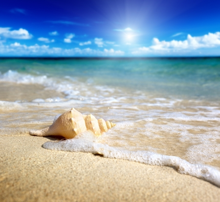 white sand beach: seashell on the beach (shallow DOF)