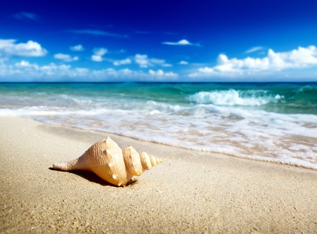 seashell on the beach (shallow DOF) photo