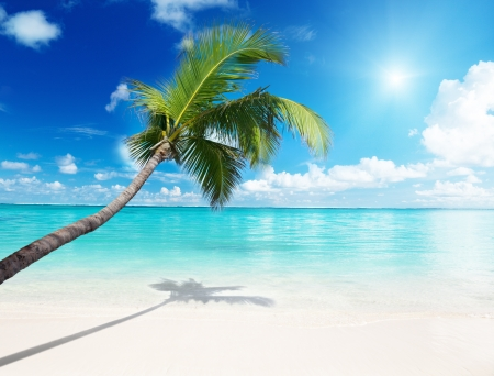caribbean island: palm and beach