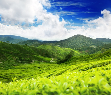 cameron highlands: Tea plantation Cameron highlands, Malaysia Stock Photo