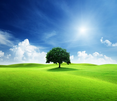 one tree and perfect grass field Stock Photo - 9595393