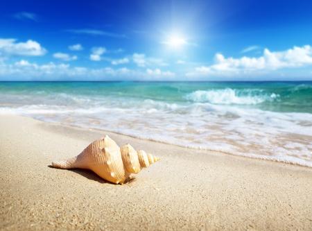 seashells: seashell on the beach
