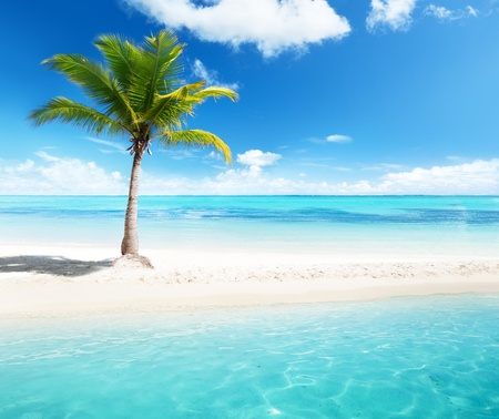 caribbean island: palm on island