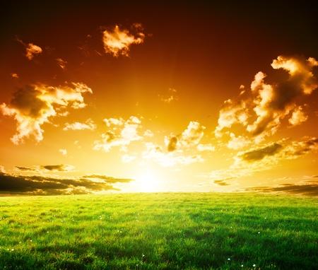 puesta de sol: primavera campo de hierba y la puesta del sol