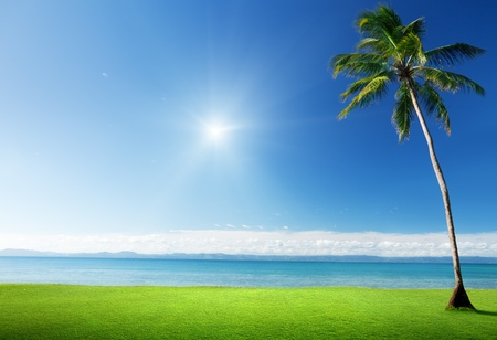 clouds: garden: palm in grass and Caribbean sea Stock Photo