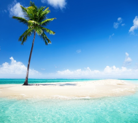 beach palm: palm on island