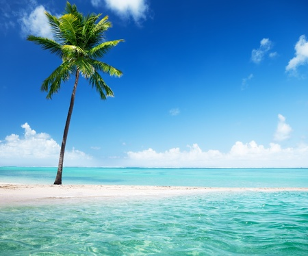 Palmen auf der Insel