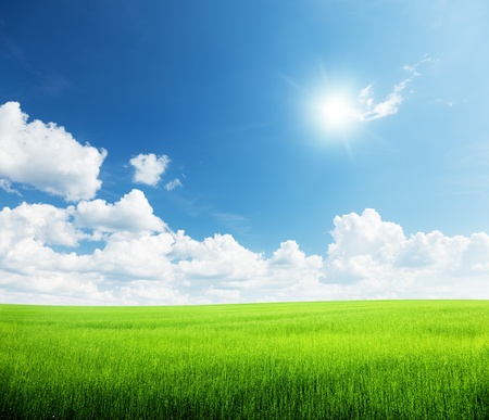 grass and perfect sky Stock Photo - 10120688