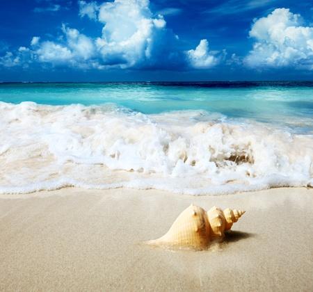 conchas: concha de mar en la playa