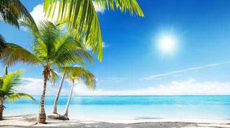 tropical island: Caribbean sea and coconut palms
