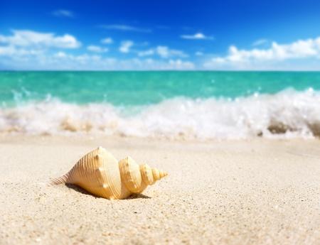 dof: seashell on the beach (shallow DOF)