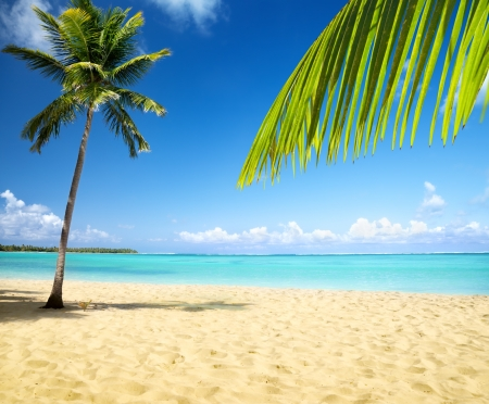 Meer und Coconut palm