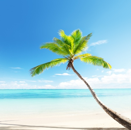 tranquility: palm on Caribbean beach Stock Photo