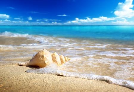 coquillage sur la plage (shallow DOF)