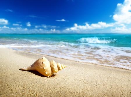 seashell on the beach photo