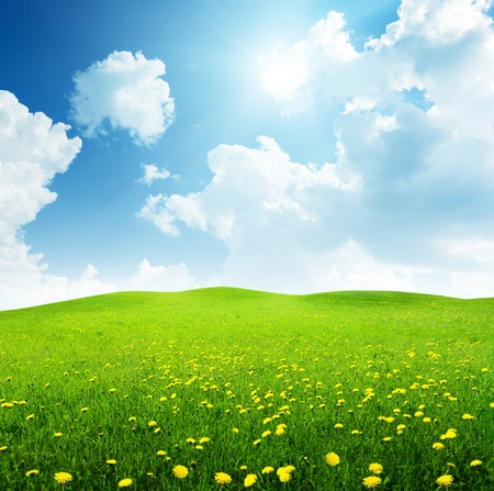 buttercup flower: field of spring flowers Stock Photo