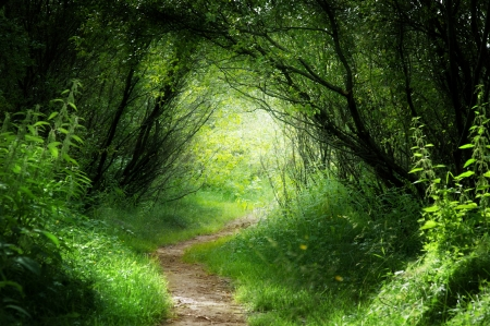 misty forest: way in deep forest Stock Photo