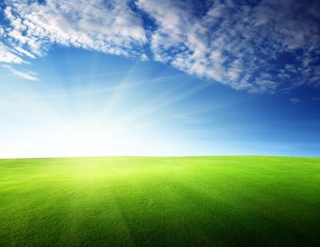 sunrise field: field of grass in sunset time