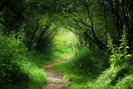 fantasy landscape: way in deep forest Stock Photo