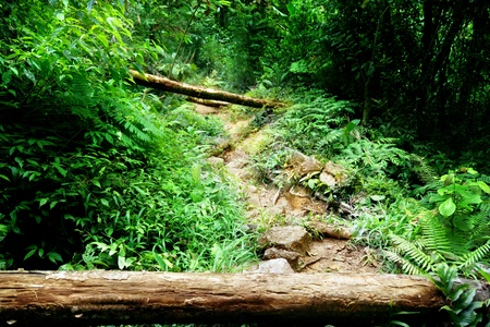 way in jungle of Malaysia photo