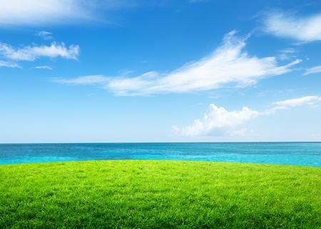 sea grass: green grass and sea