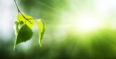 숲에서 자작 나무의 잎
