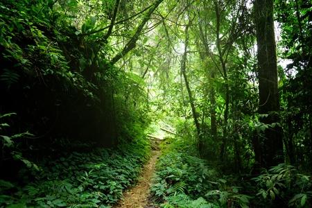 dark jungle green: way in jungle of Malaysia Stock Photo