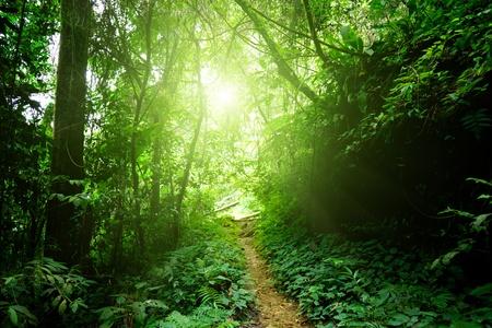 selva: camino en la selva de Malasia