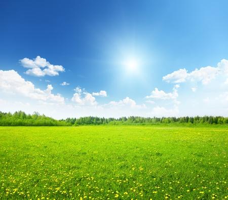 campo de margaritas: campo de flores de la primavera y el cielo perfecto Foto de archivo
