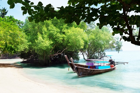 tree in water and long boats on beach in Thailand photo