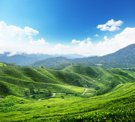 Tea plantation Cameron highlands, Malaysia Stock Photo
