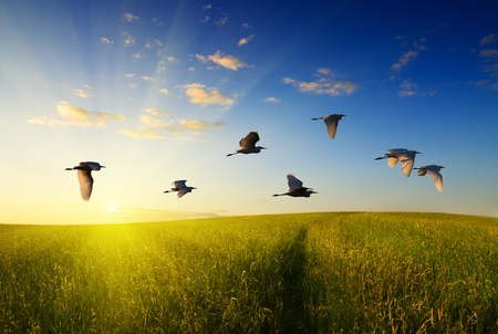 heron: field of grass and flying birds Stock Photo