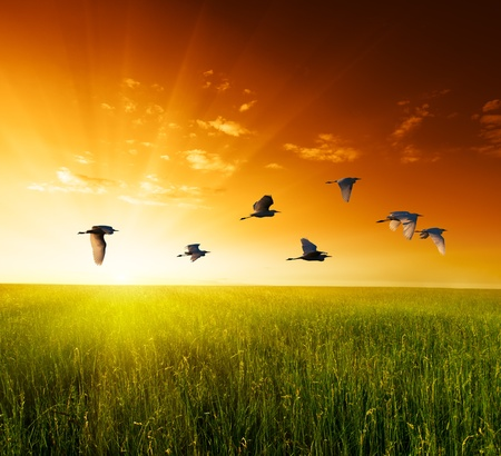 field of grass and flying birds Stock Photo - 10835809