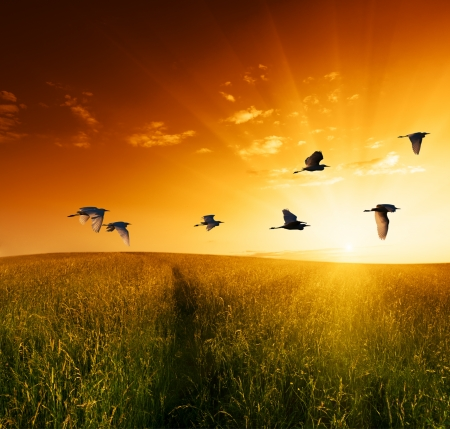 red morning: field of grass and flying birds Stock Photo