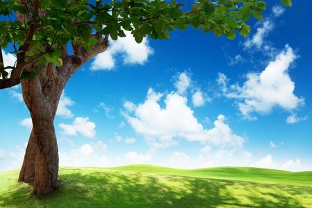 el campo verde y el árbol Foto de archivo