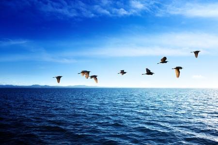 カリブ海と日没時間の鳥