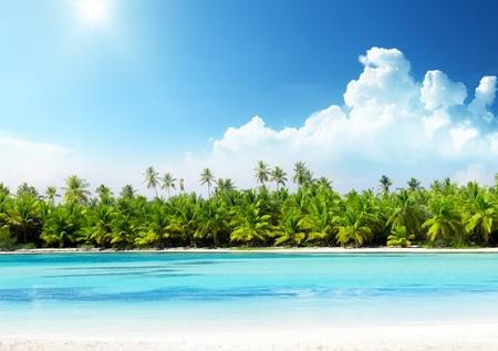 palmeras y la playa