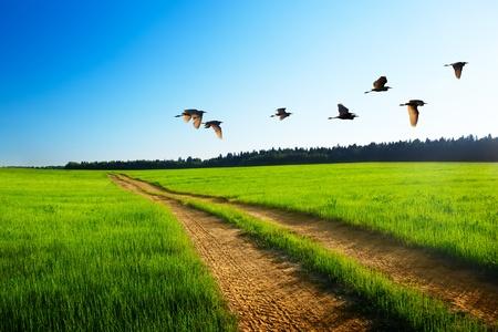 Vögel und Straße