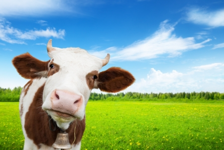 cow and field of fresh grass Stock Photo