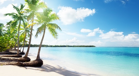beautiful scenery: palms and Caribbean beach