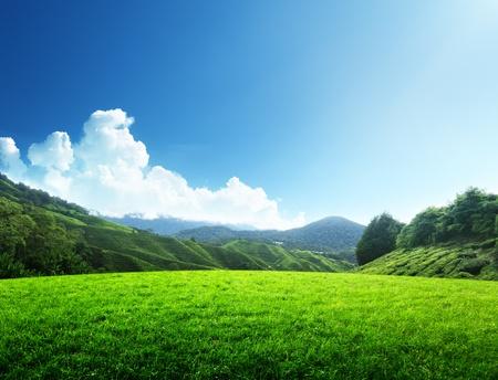 cielo despejado: campo de hierba de la primavera y la montaña Foto de archivo