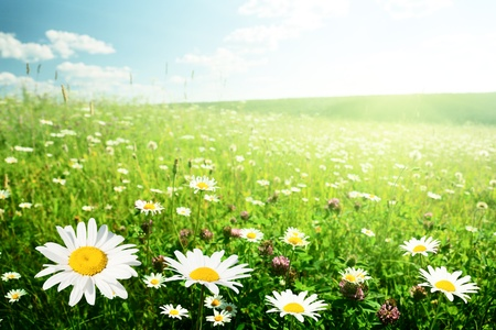 field of wild flowers photo
