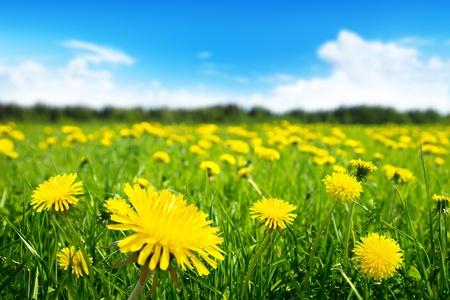春の花と完璧な晴れた日のフィールド