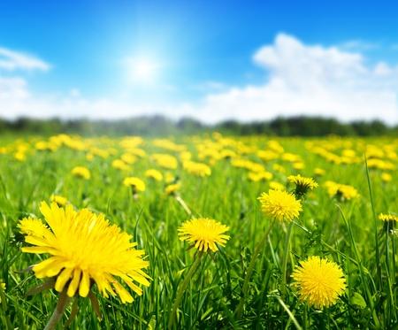 봄 꽃과 완벽한 화창한 날의 필드