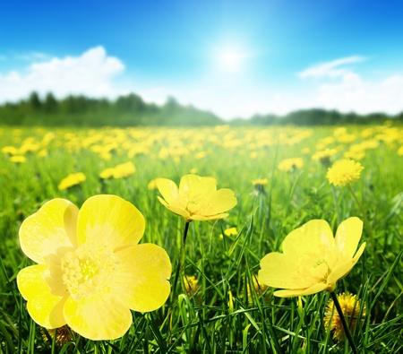 dia soleado: Campo de flores de la primavera y el día soleado perfecto