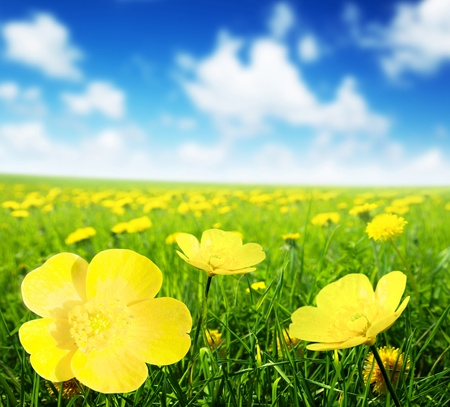 Field of spring flowers and perfect sunny day Stok Fotoğraf - 13170090