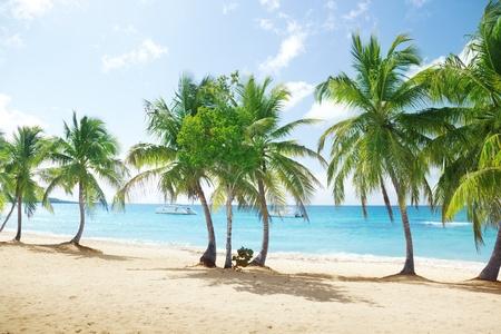 catalina: Catalina island in Dominican republic