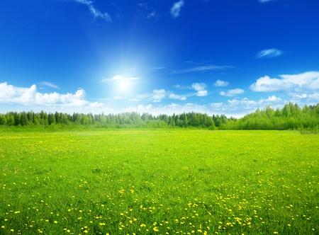 春の花と完璧な空のフィールド 写真素材