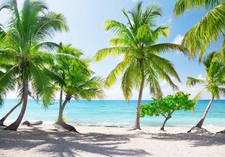 catalina: Isola di Catalina in Repubblica Dominicana