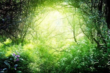 sun in deep forest photo